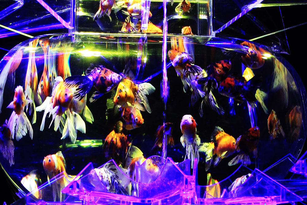 アートアクアリウム 2013